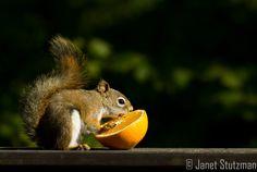 gotta get your vitamin C
