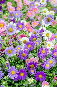 Delightful pastel daisies