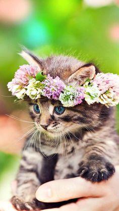 Chaton portant une couronne de fleurs : so cute