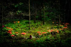 fairy ring of mushrooms