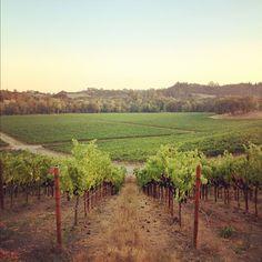 Floodgate Vineyard in Santa Rosa, California / photo by Helena Price