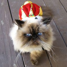 Image from http://www.prlog.org/10172186-cat-wearing-hat-for-animal-rescue.jpg.