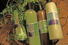 8oz Moringa Shampoo and Conditioner set + Gift #HealingMoringaTree