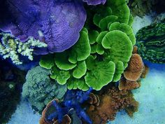 Best tanks from around the world. - Page 10 - Reef Central Online Community
