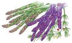 All About Growing Asparagus - Organic Gardening - MOTHER EARTH NEWS