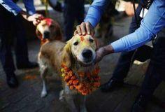 Nepal: Realizan festival para celebrar la lealtad de los perros - Quiltros Magazine
