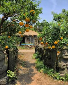 Oranges And Lemons, Splish Splash, South Korea, Anime Art, Burfi Recipe, Orange Trees, Scenery, Asia, Japan
