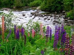 """Experience a touch of old Maine by visiting historic Forest Lodge and the Winter House made famous by Louise Dickinson Rich in her book """"We Took to the Woods"""". The camps are now owned by Aldro French who runs Rapid River Fly Fishing in the western mountains of Maine."""