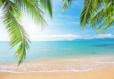 Palm and tropical beach Wall Mural • Pixers® - We live to change