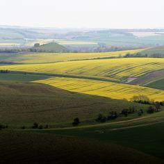 Near Alton Barnes, Wiltshire, 6th May 2016 | by jenniestoddart #landscape #wiltshire #england #rural #chalk #downs #downlands #oilseedrape #canola #fields #patchwork