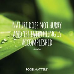 Nature does not hurry and yet everything is accomplished. - Lao Tsu. www.hungryforchange.tv