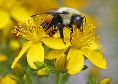 Many species of wild bees, butterflies and other critters that pollinate plants are shrinking toward extinction, and our food supplies could be about to suffer, warns the UN. The 20,000 or so species of pollinators are key to hundreds of billions of dollars' worth of crops each year, from fruits and vegetables to coffee and chocolate