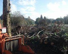 Tree Service in Mount Vernon