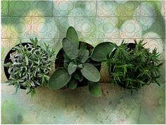 Natural Herbal Medicine Ideas