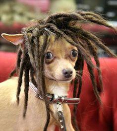 verplichte hond haar pruiken pruik permanenten tij hond kan op hoge temperatuur draad j60 pigtail