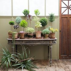 vintage side table with various succulents, mini topiaries, and String of Pearls