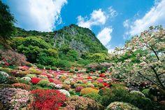 Mifuneyama Rakuen Flower Festival boasts 20,000 azalea bushes Takeo g Takeo City Tel 0954-23-3131 Map Code 104 347 369