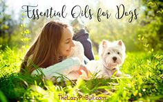 5 Essential Oils for Dogs | http://www.thelazypitbull.com/5-essential-oils-for-dogs/