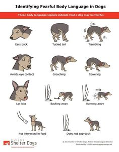 Dog behavior signs