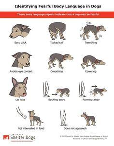 Dog behavior signs