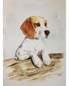 Pet Portrait in Watercolour of Alan Reed