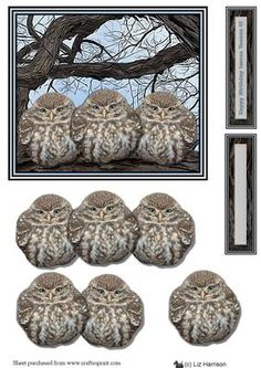 3 Little Owls in a Tree 3D Decoupage on Craftsuprint designed by Liz Harrison - A great card for all occasions for friends or family. layer up the decoupage layers ,or use as a large topper and use the other pieces for another project, blank message tags included to add a name ,message or greeting - Now available for download!