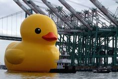 Check out this real giant rubber duck! If this made you smile visit Reimagine.me for more moodshifters