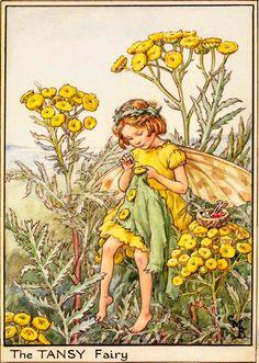 The Tansy Fairy - Flower Fairies
