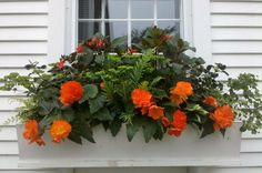 Stunning orange // Great Gardens & Ideas //