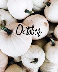 "1,655 Likes, 3 Comments - Urban Planet (@urbanplanet) on Instagram: ""Happy best month ever! 🎃👻🍂☁️ #UrbanPlanet #October #Fall"""