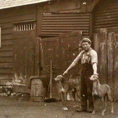 Old Photo Greyhounds