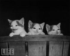 Kittens in 1950!