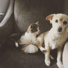 Instagram: Lunapets_dallas follow my fur babies !
