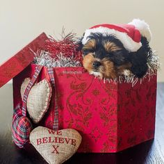Day 3  When all your #christmas wishes come true . Photo by @the_newborn_photographer  #puppy #puppiesofinstagram #puppyinabox #dogsofinstagram by beardogtails