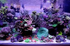 Chingchai Modern Reef Aquarium #aquarium Coral Aquarium, Saltwater Aquarium Fish, Saltwater Tank, Planted Aquarium, Fish Aquariums, Aquarium Ideas, Marine Fish Tanks, Marine Tank, Reef Aquascaping