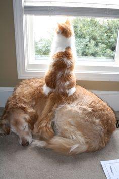catsbeaversandducks:  Realfriends are there for you. Photo via I ♥ Cats