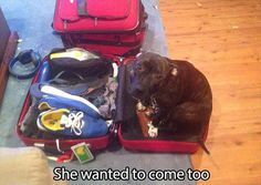 22 Pictures Only Dog Owners Will Understand