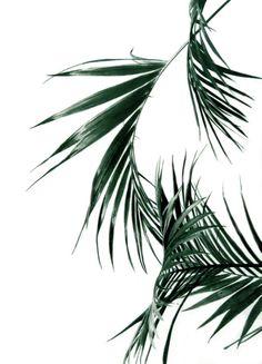 Palms Art Print by Rachel De Vita