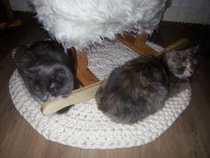 Kissat tykkäävät uudesta matostaan :)
