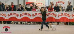 @Arion_ES @defarrajon otra fantástica fotografía de la #Exposición #Internacional #Canina #Martorell