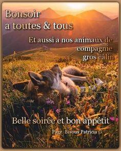 Movies, Movie Posters, Facebook, Pets, Bonjour, Night, Films, Film Poster, Cinema