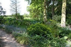 a woodland garden, Beth Chatto garden
