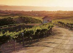 Wine Country, Temecula, California
