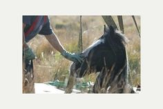 Pictures: Exeter crews called in to rescue horse from mud hole   Exeter Express and Echo