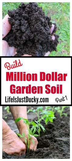 How to build million dollar vegetable garden soil. Easy to follow tips for organic gardening success. How to make the best dirt that your plants will love.
