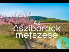 Hogyan kell metszeni az őszibarackfát? / kert TV - YouTube Japanese Garden Landscape, Flower Boxes, Flowers, Garden Tool Set, Personalized Notebook, Garden Landscaping, Plants, Youtube, Bloemen