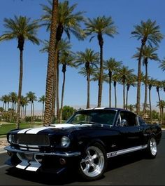 The TRUE American muscle car: 1965 Ford Mustang. Agree? Hit the link to see more: http://www.ebay.com/itm/Ford-Mustang-NO-RESERVE-1965-FORD-MUSTANG-FASTBACK-SHELBY-GT-350-TRIBUTE-ROTISSERIE-RESTO-NO-RESERVE-/111313194885?forcerrptr=true&hash=item19eac88f85&item=111313194885&pt=US_Cars_Trucks?roken2=ta.p3hwzkq71.bdream-cars