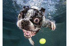 Seth Casteel's Under Water Dogs series