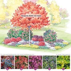 Don't let a beautiful tree stand alone! Check out these perfect companion plants for an eye-catching fall show.