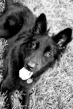 Pet Owner(s): Celess Titus Pet: Ellie (Collie Chow mix)